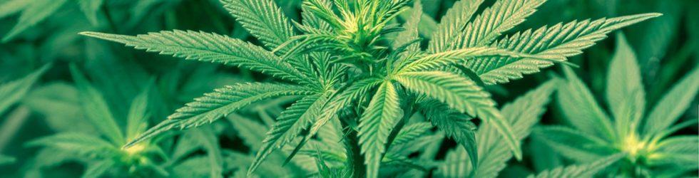 Green (Marijuana) FinTech panel #greenfintech